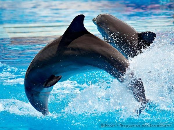 Передвижной дельфинарий