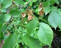 Памятник природы «Вязовские уремные леса»