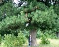 Нижнесалдинская кедровая роща