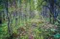 Шувакишский лесопарк