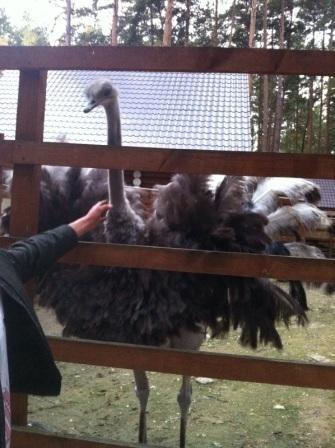 Контактный зоопарк в клубе Мистер Фишер