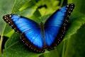 Парк бабочек