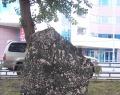 Уральский геологический музей Уральской государственной горной академии совместно с Уральским центром камня