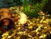 Выставка экзотических рыб (Аквагалерея) - Закрыта