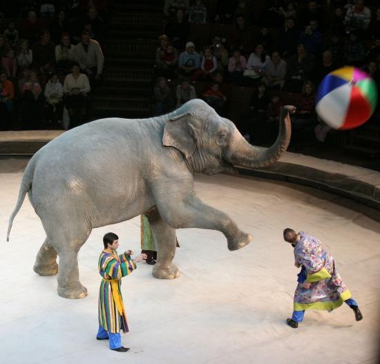 Картинки цирку